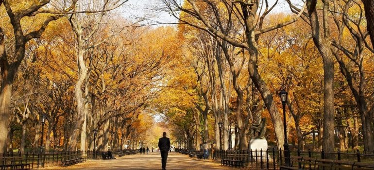 A man walking through a park with a lot of trees