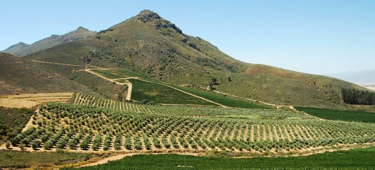 a picture of vineyards bellow a mountain top