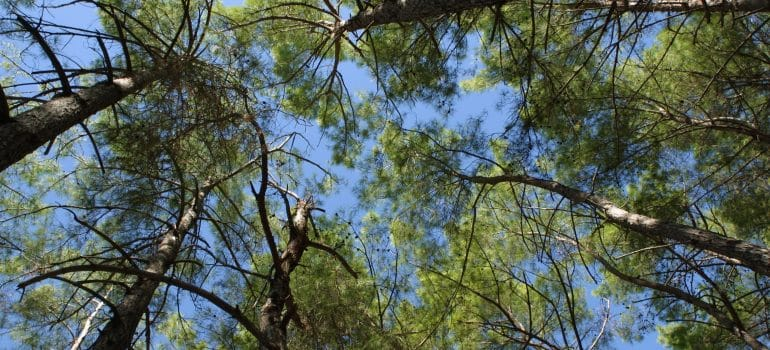 a view from the ground looking at the top of the trees