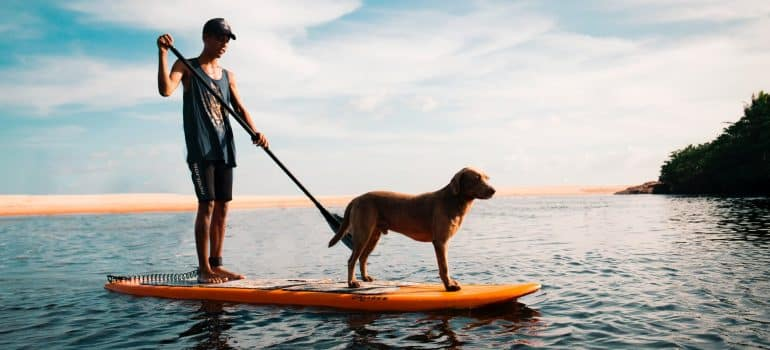 a man paddling on the water with his dog on the board